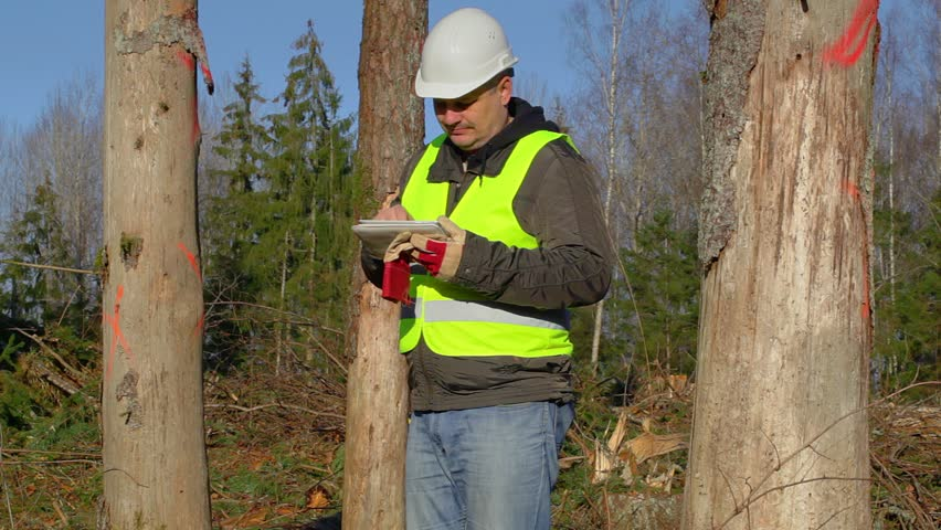 man check trees